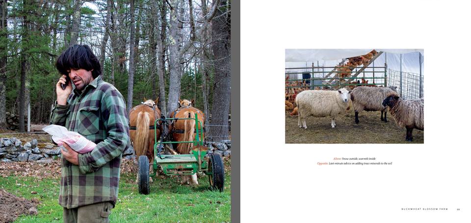 Book Sample: Pages of Chapter Buckwheat Blossom Farm